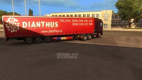 Dianthus Transport-2